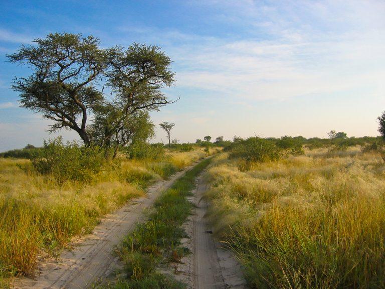Auf der Pirsch im Khutse Game Reserve