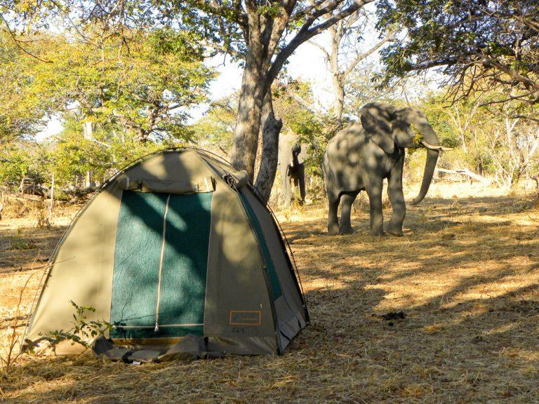 Ein Elefant besucht das Camp