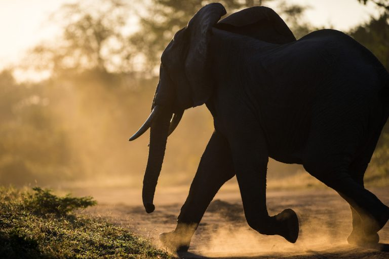 Elefant im Luangwa Nationalpark