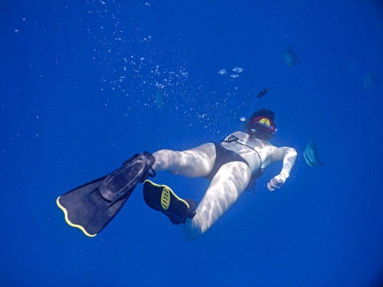 Die Unterwasserwelt erkunden