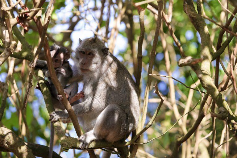 Zutrauliche Affen füttern