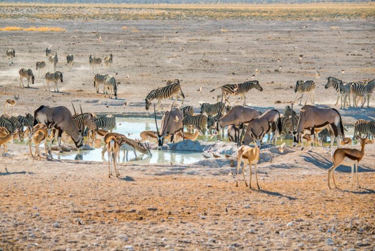 Begehrte Wasserlöcher im Etosha Nationalpark