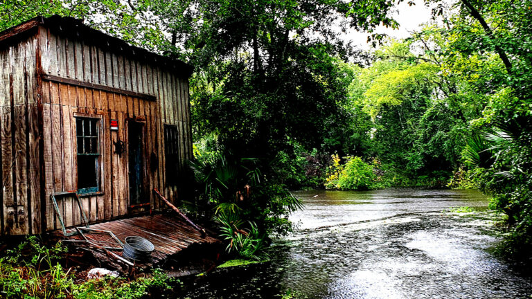 Louisiana Sumpflandschaft
