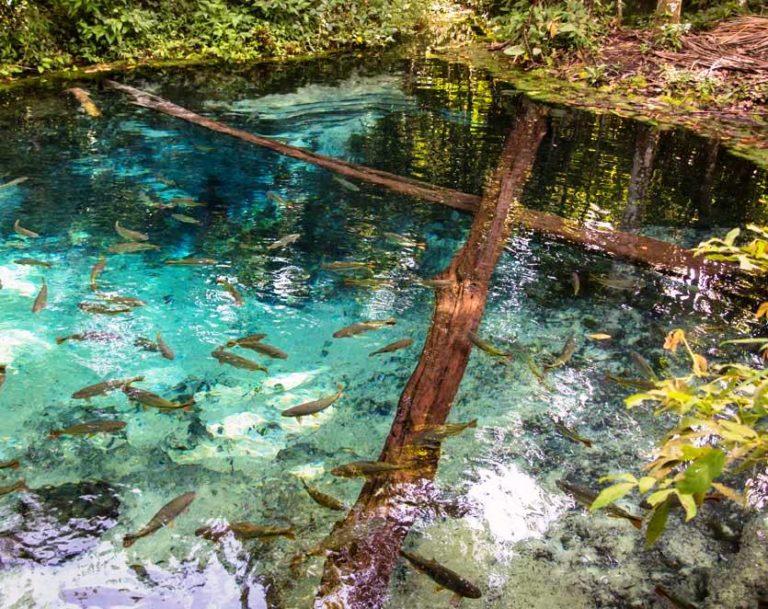 Die kristallklaren Flüsse bei Bonito laden zum Schnorcheln ein