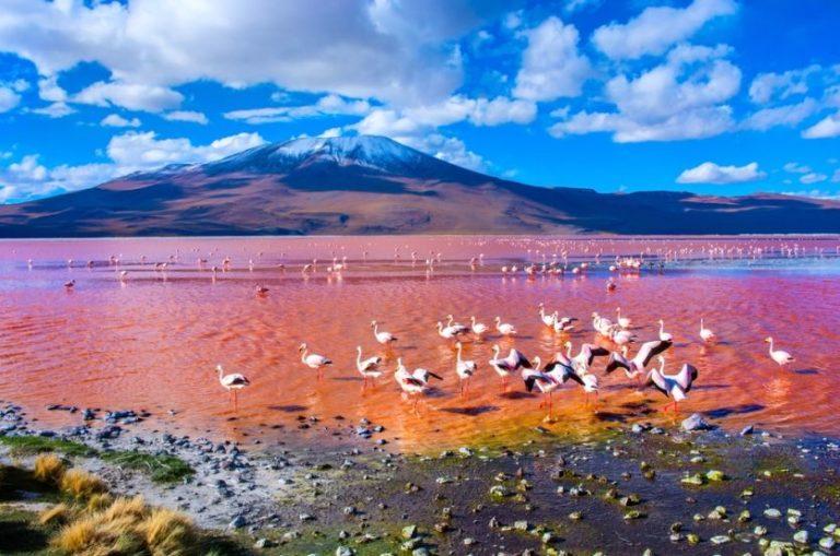 Flamingos in der beeindruckenden Landschaft des Altiplanos