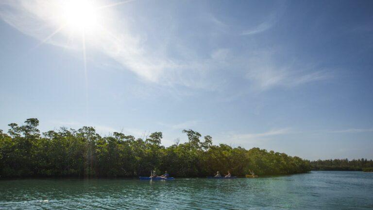 Mit dem Kajak entlang der Mangroven