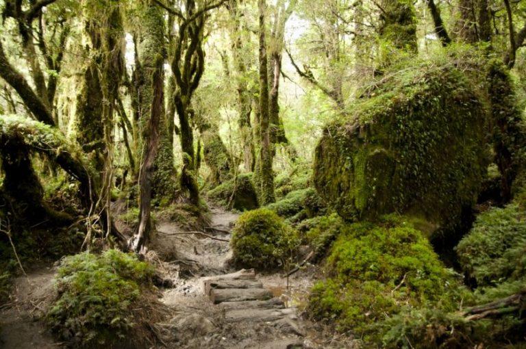 """Der """"Zauberwald"""" im Queulat Nationalpark"""
