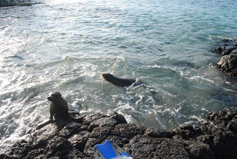 Die Robben fordern zum gemeinsamen Baden auf