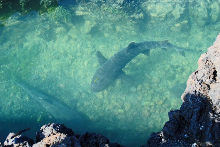 Riffhaie sind auch keine Seltenheit