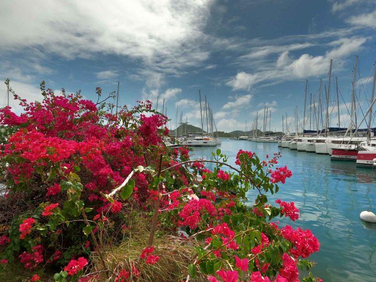 Blumeninsel Martinique