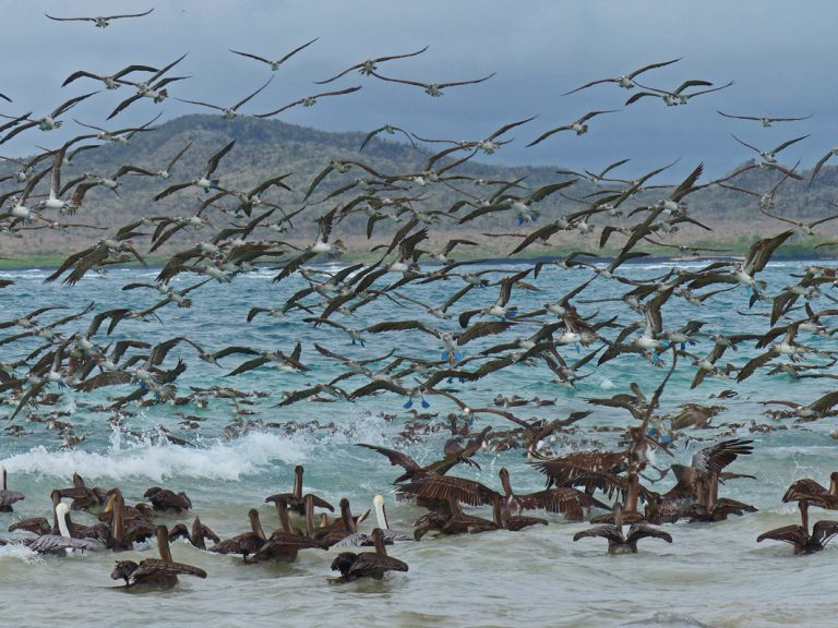 Vogelschwarm am Strand