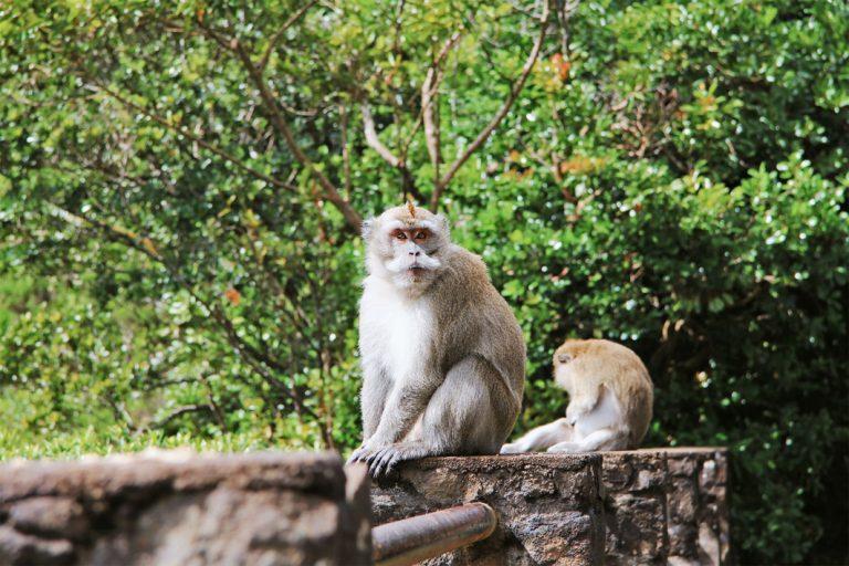Zutrauliche Affen