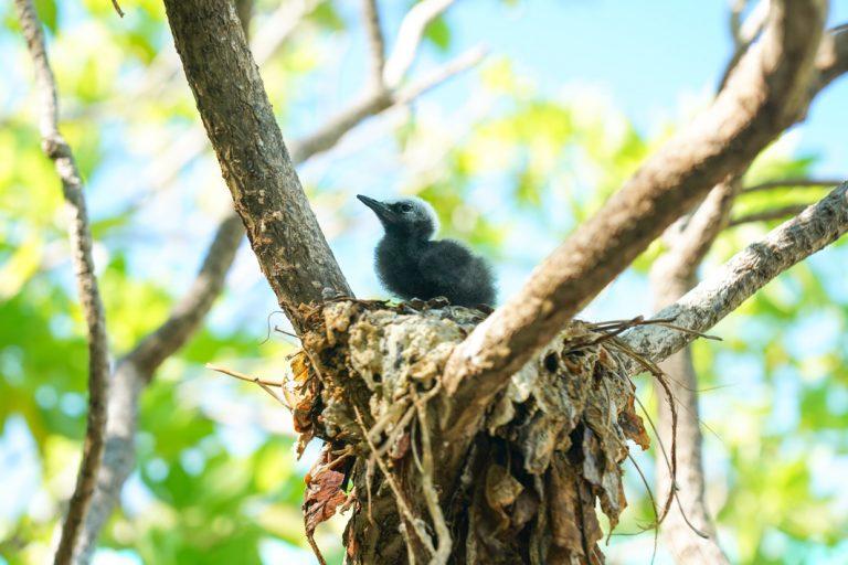 Nachwuchs auf Birds Island