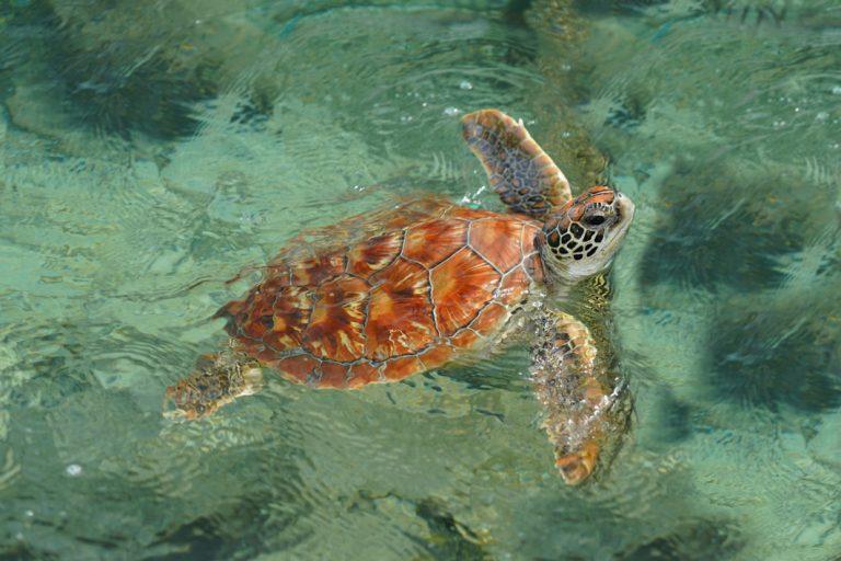 Eine Meeresschildkröte sagt Hallo