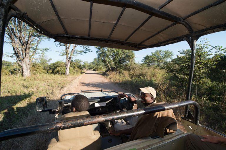 Auf der Suche nach dem nächsten Wildtier