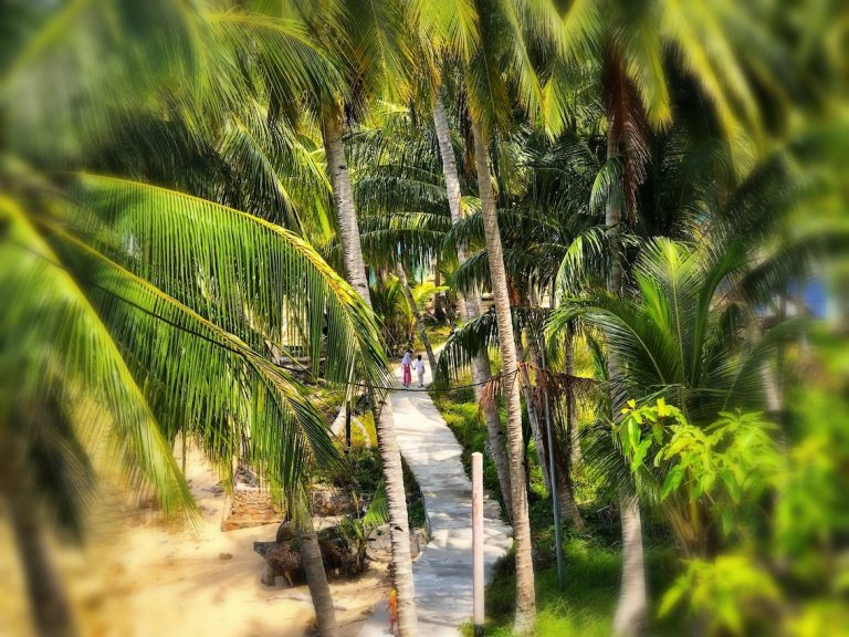 Von Palmen umsäumte Dorfstraße