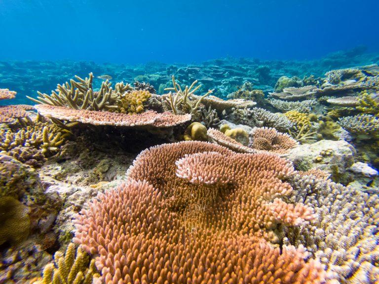 Unberührte Korallenriffe