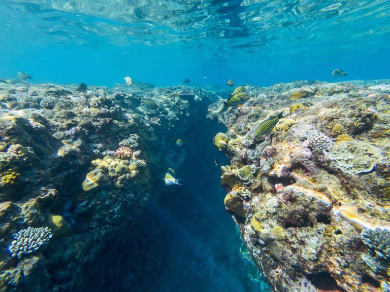 Beeindruckende Unterwasserwelt