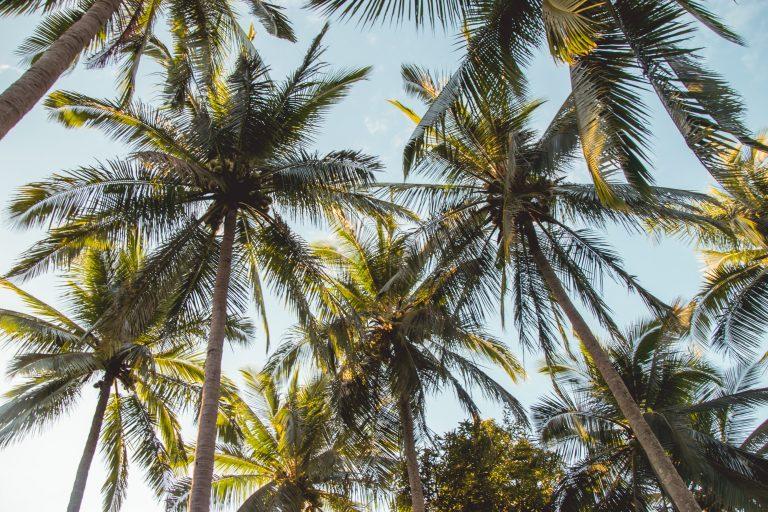 Palmengesäumte Strände