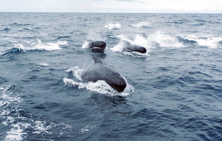 Wale in Sicht!