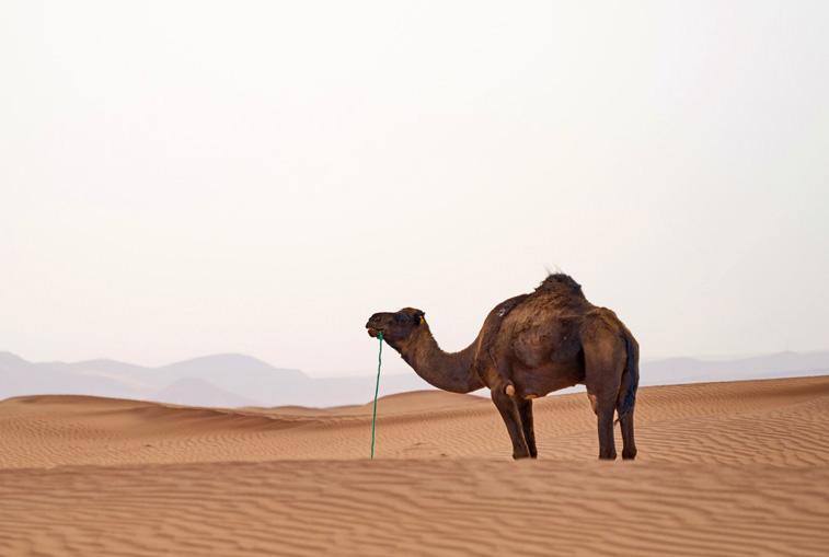 Auf einem Kamelrücken die Weiten der Wüste entdecken