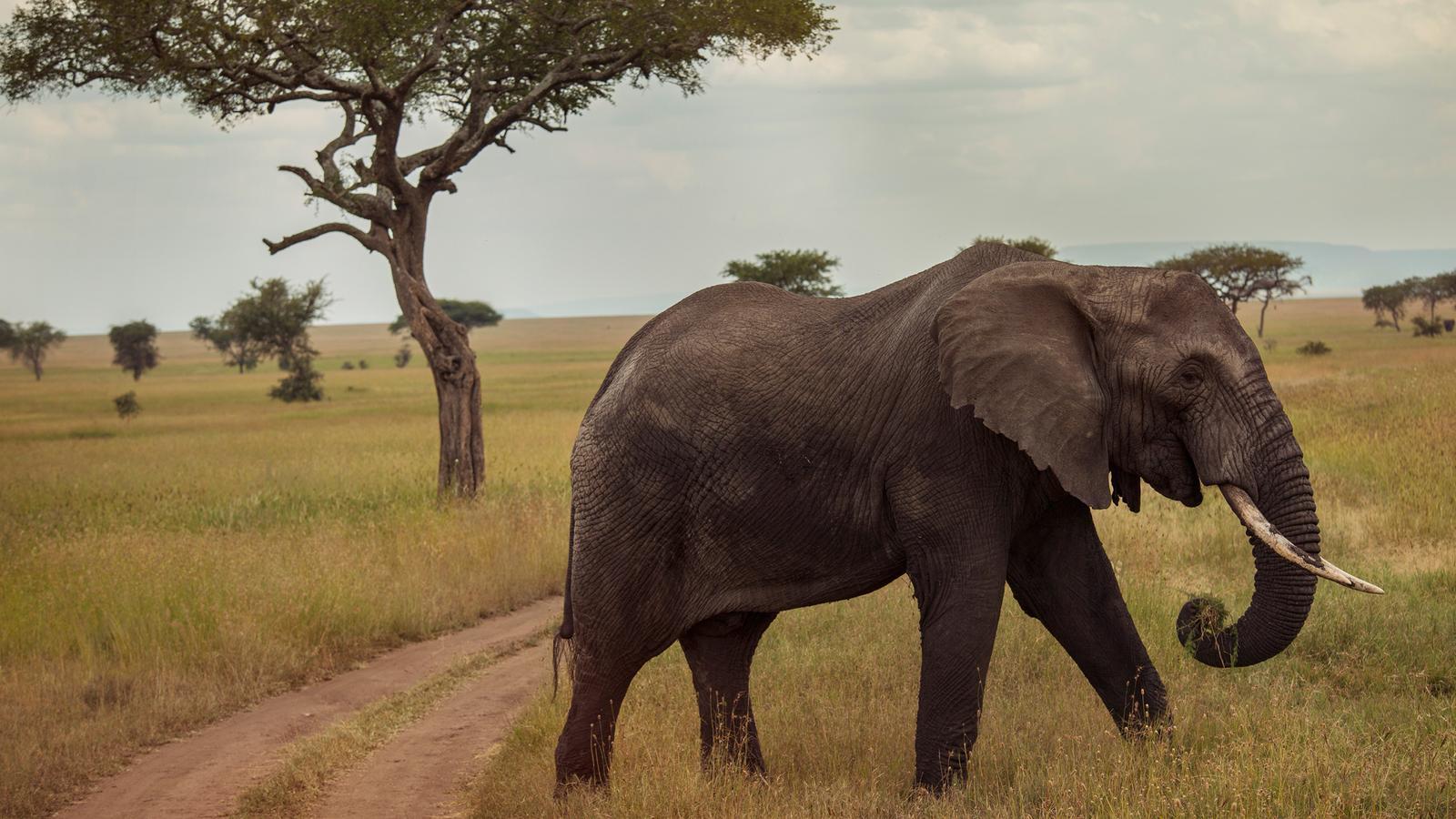 Afrika Reisen für junge Leute traveljunkies Kenia Malawi Tansania Sambia Simbabwe Safari Gruppenreise Abenteuerreise Erlebnisreise Serengeti Ngorongoro Sansibar Victoriafälle