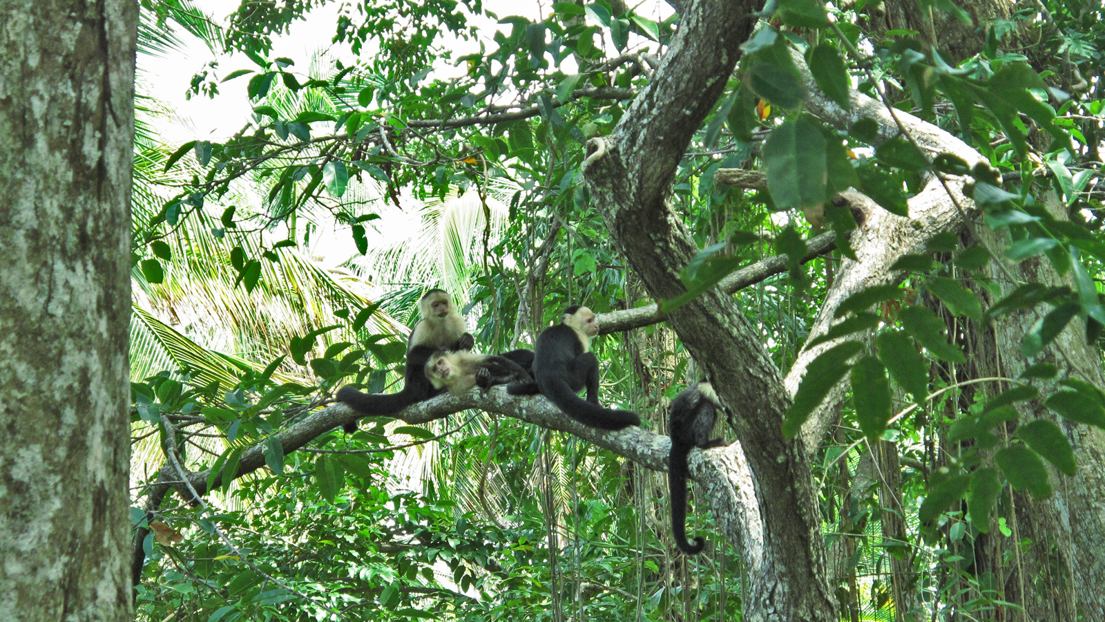 Aktivreise durch Costa Rica Gruppenreise traveljunkies