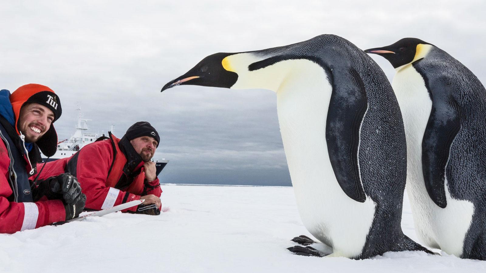 Antarktis Expedition Südpol Königspinguin traveljunkies