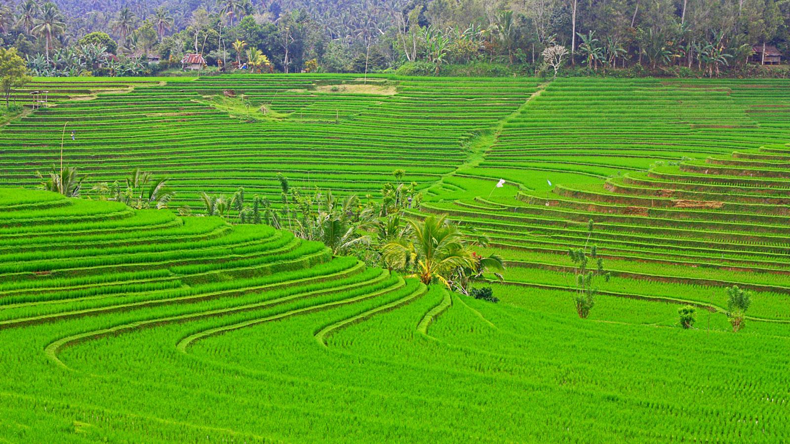 Bali Reisterrassen Abenteuerreise Gruppenreise Erlebnisreise Indonesien Reisen für junge Leute traveljunk