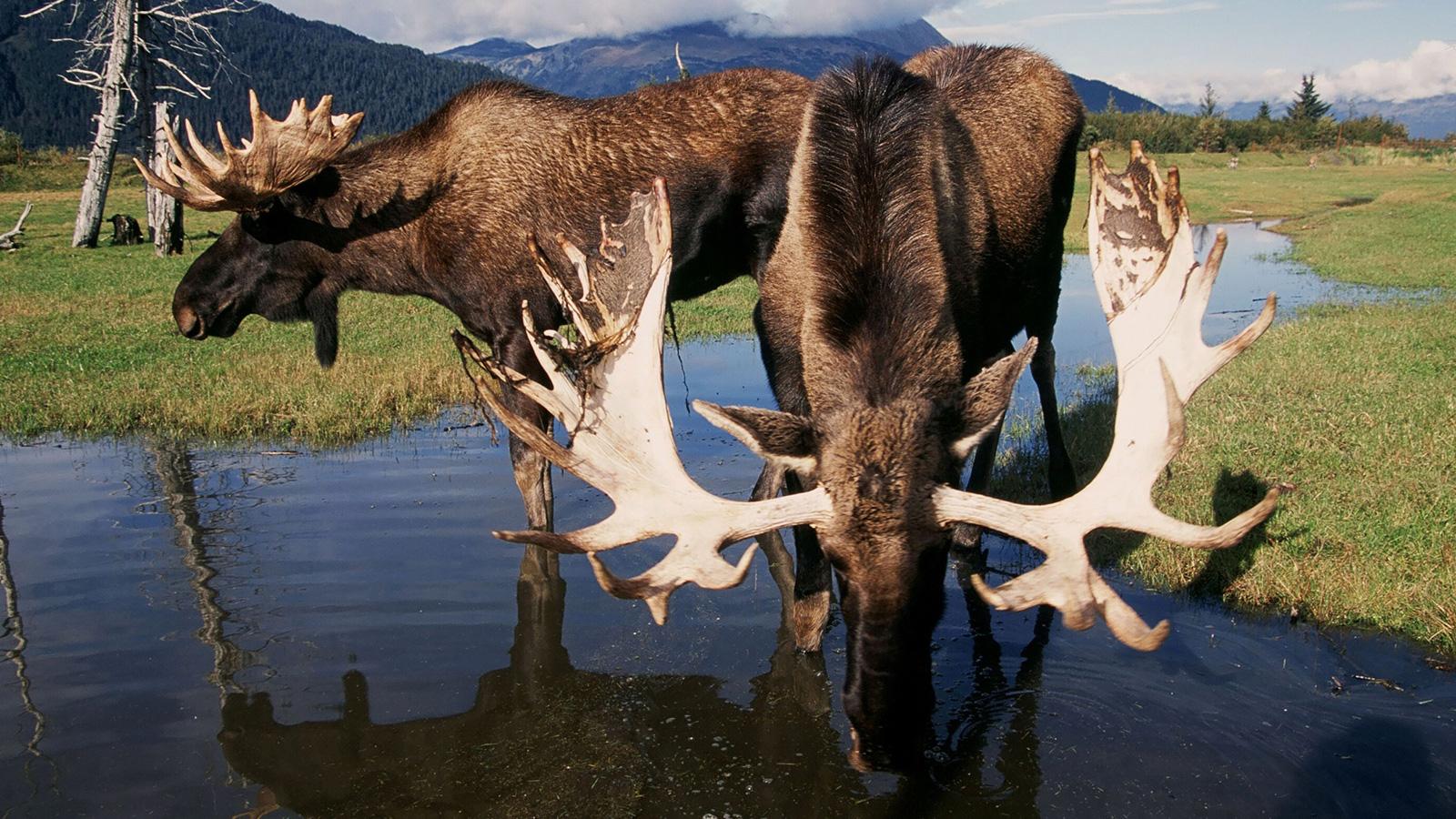 Die Naturwunder von Alaska Gruppenreise für junge Leute traveljunkies