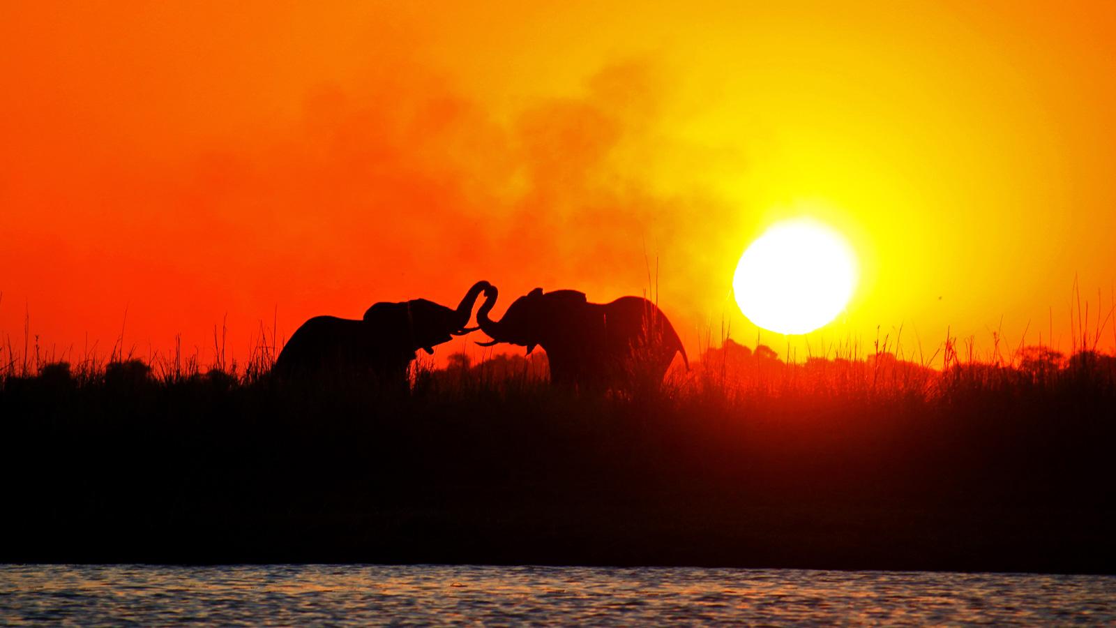 Elefanten im Chobe Nationalpark Botswana Erlebnisreise traveljunkies