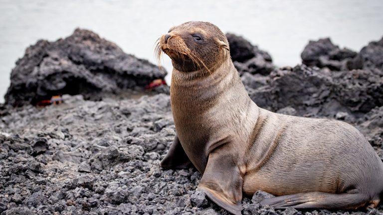 Galapagos Inseln – preiswert reisen Reisen für junge Leute Gruppenreise Erlebnisreisen traveljunkies