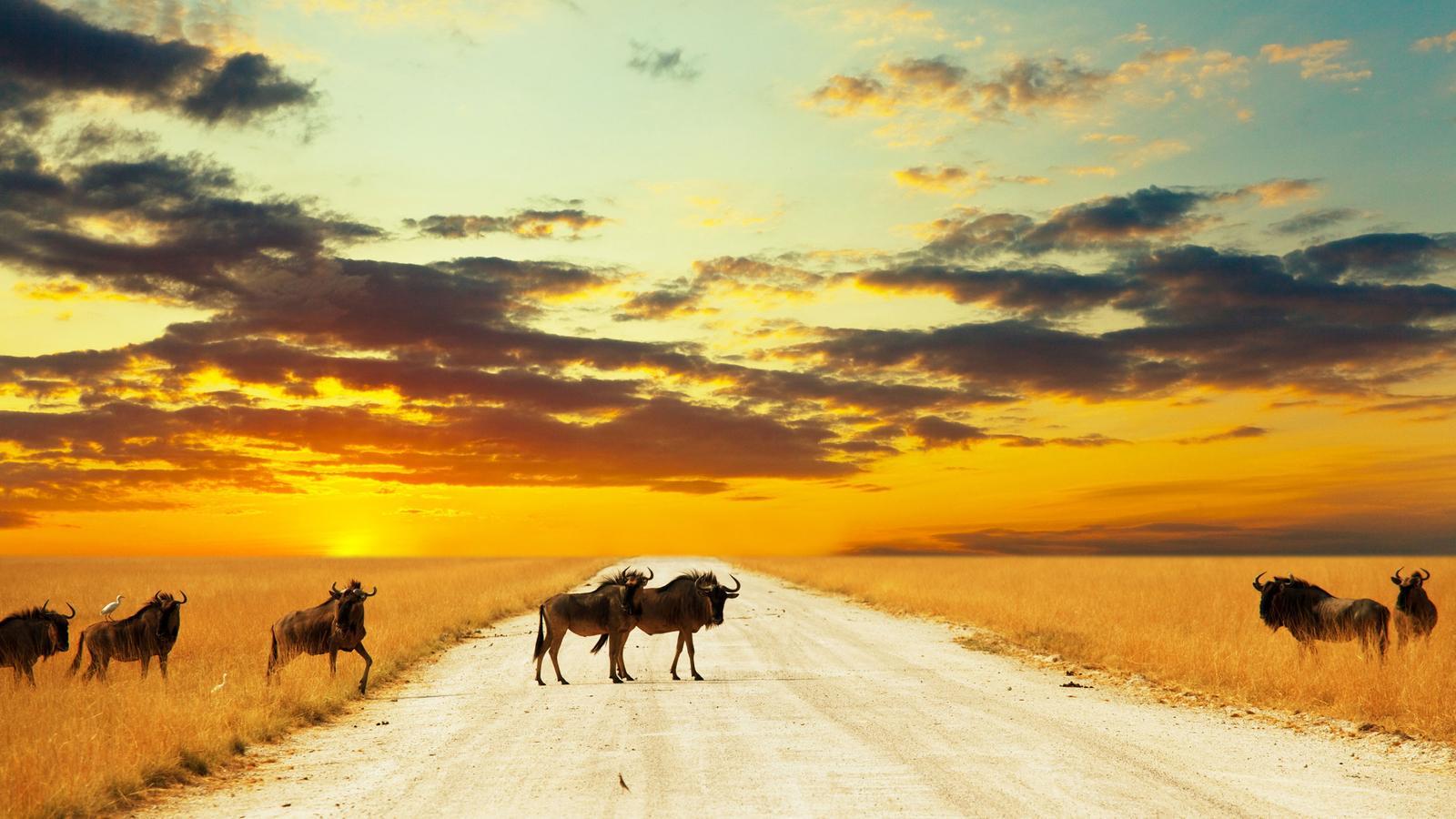 Gnus in Serengeti Tansania Afrika Reisen für junge Leute traveljunkies Safari