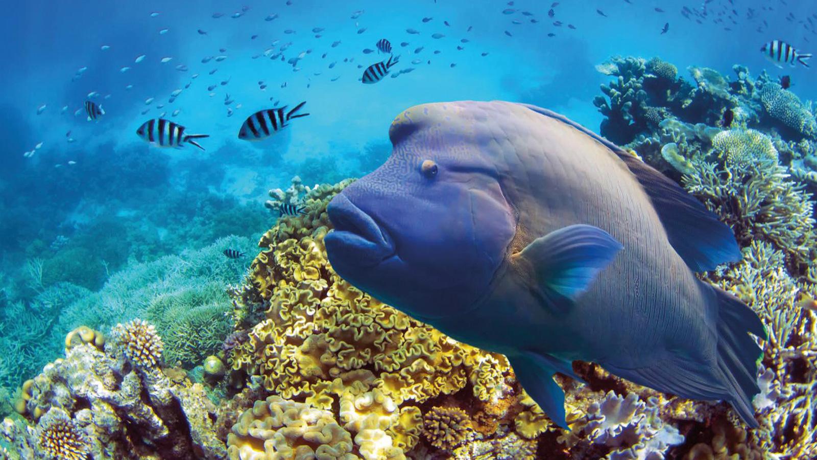 Great Barrier Reef Australien Reisen für junge Leute traveljunkies