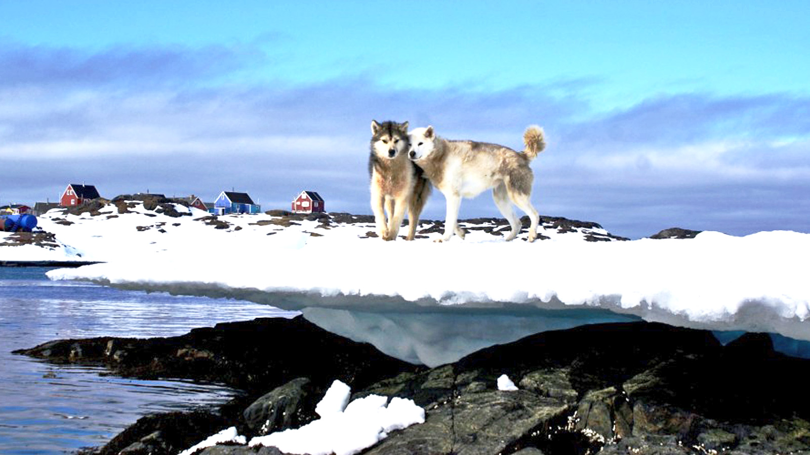 Segelexpedition durch Grönland mit Husky traveljunkies