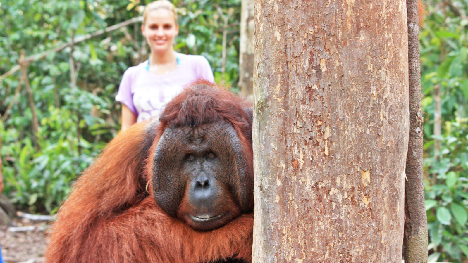 Kalimantan Orang-Utans Bootstour im Tanjung Puting Nationalpark traveljunkies