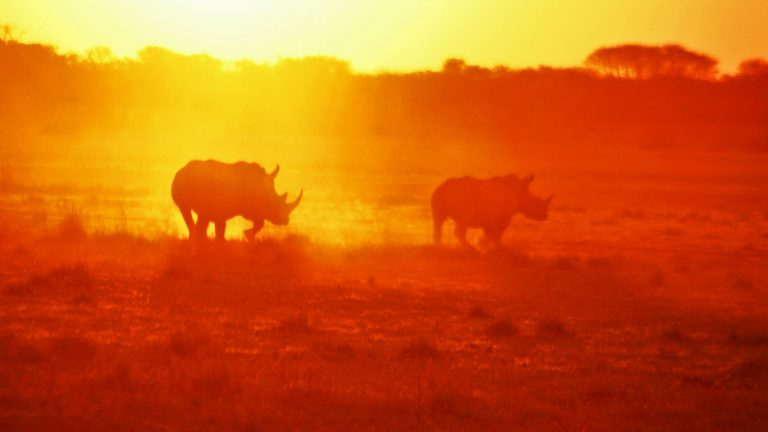 Khama rhino Botswana Erlebnisreise traveljunkies