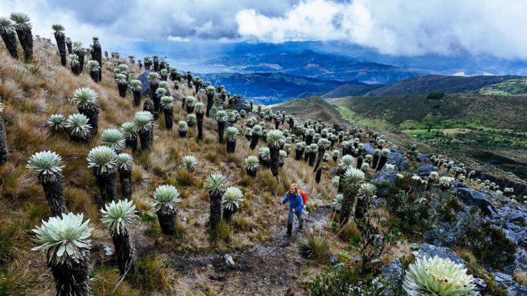 Kolumbien Aktivurlaub in der Gruppe traveljunkies