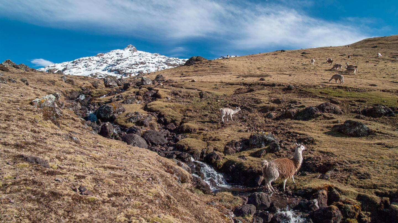 Lares Trekking Peru Aktivreise in der Gruppe traveljunkies