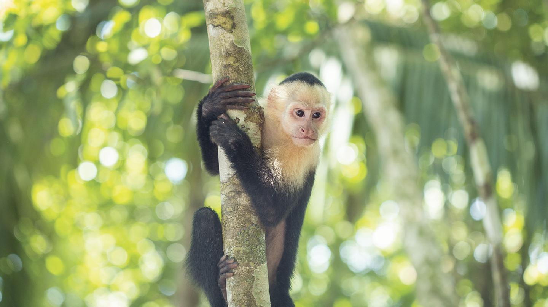 Manuel Antonio Nationalpark Costa Rica Erlebnisreise in der Gruppe traveljunkies