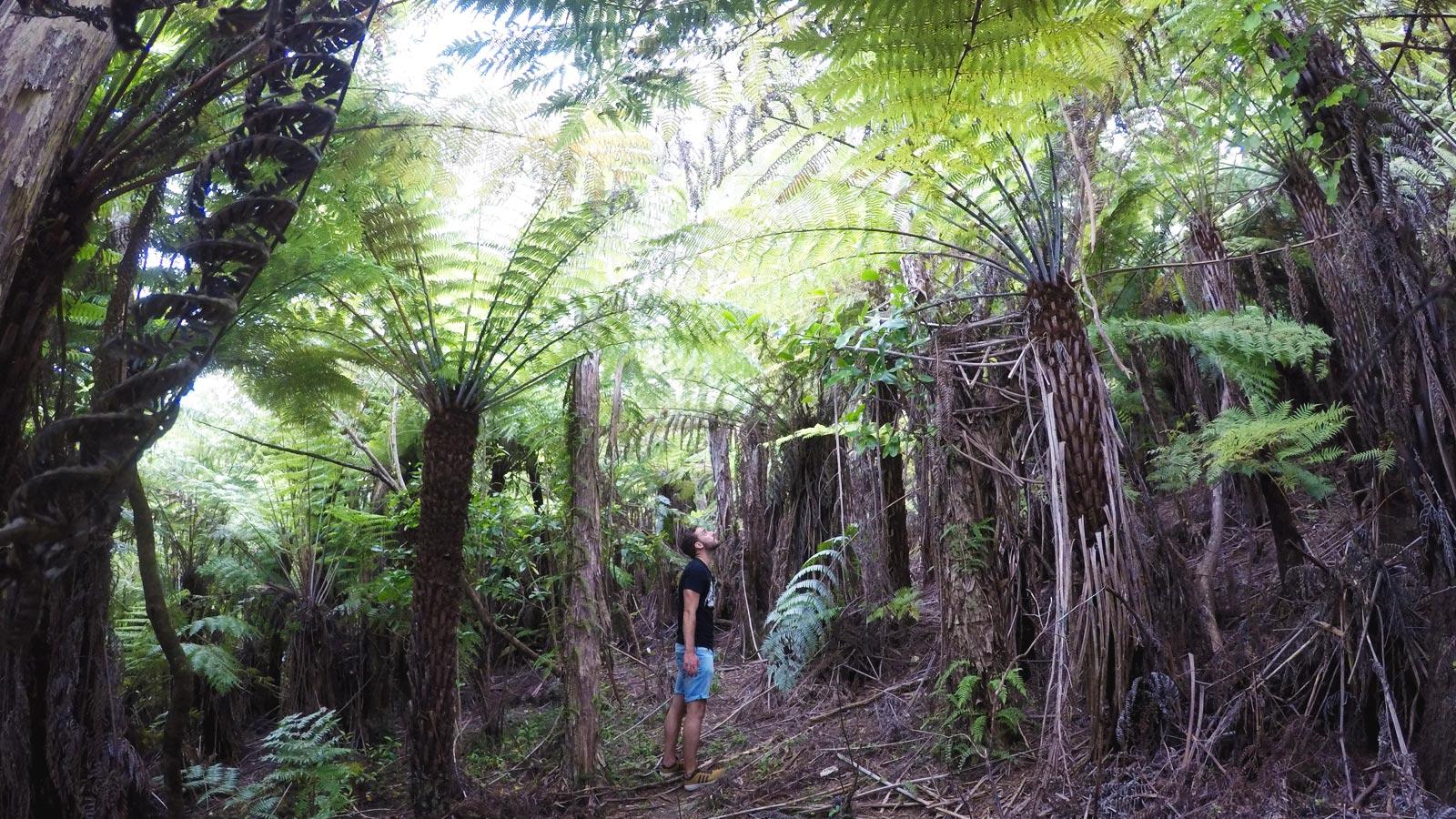 Marlborough Sounds aktive Gruppenreise Neuseeland Südinsel traveljunkies