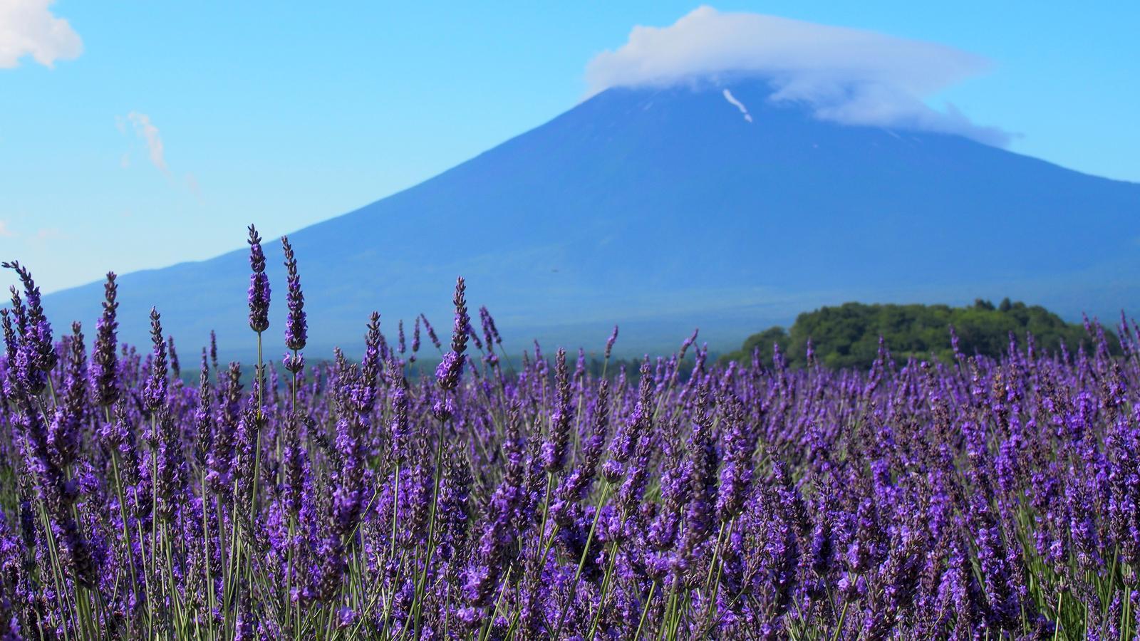 Mount Fuji Besteigung Japan Abenteuerreise in der Gruppe traveljunkies