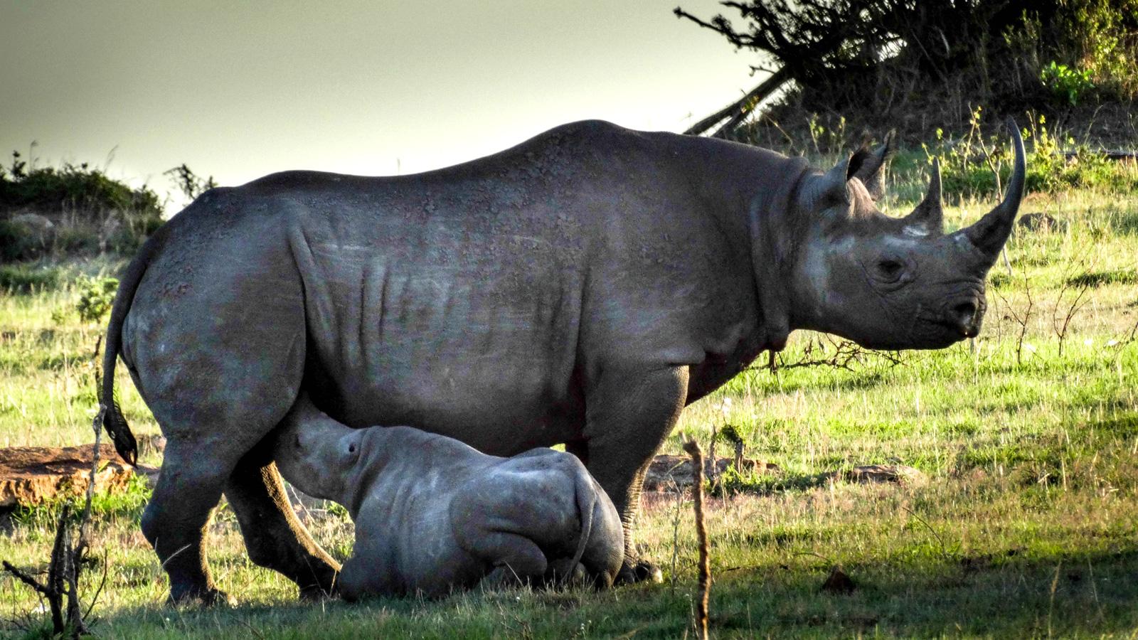 Nashorn Serengeti Gruppenreise Tansania Safari traveljunkies