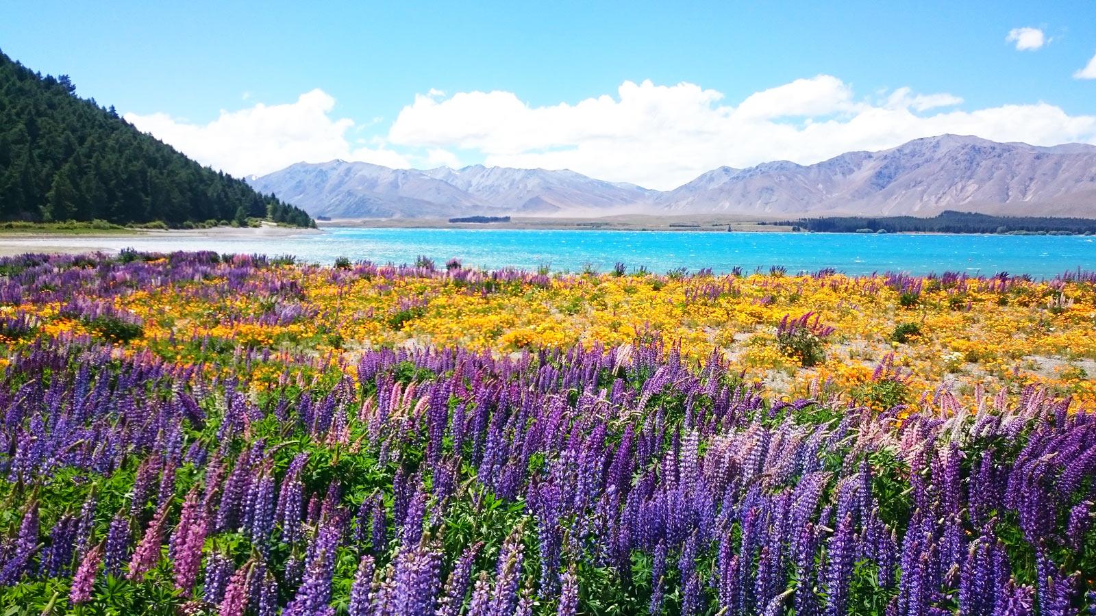 Neuseeland Südinsel aktive Erlebnisgruppenreise traveljunkies