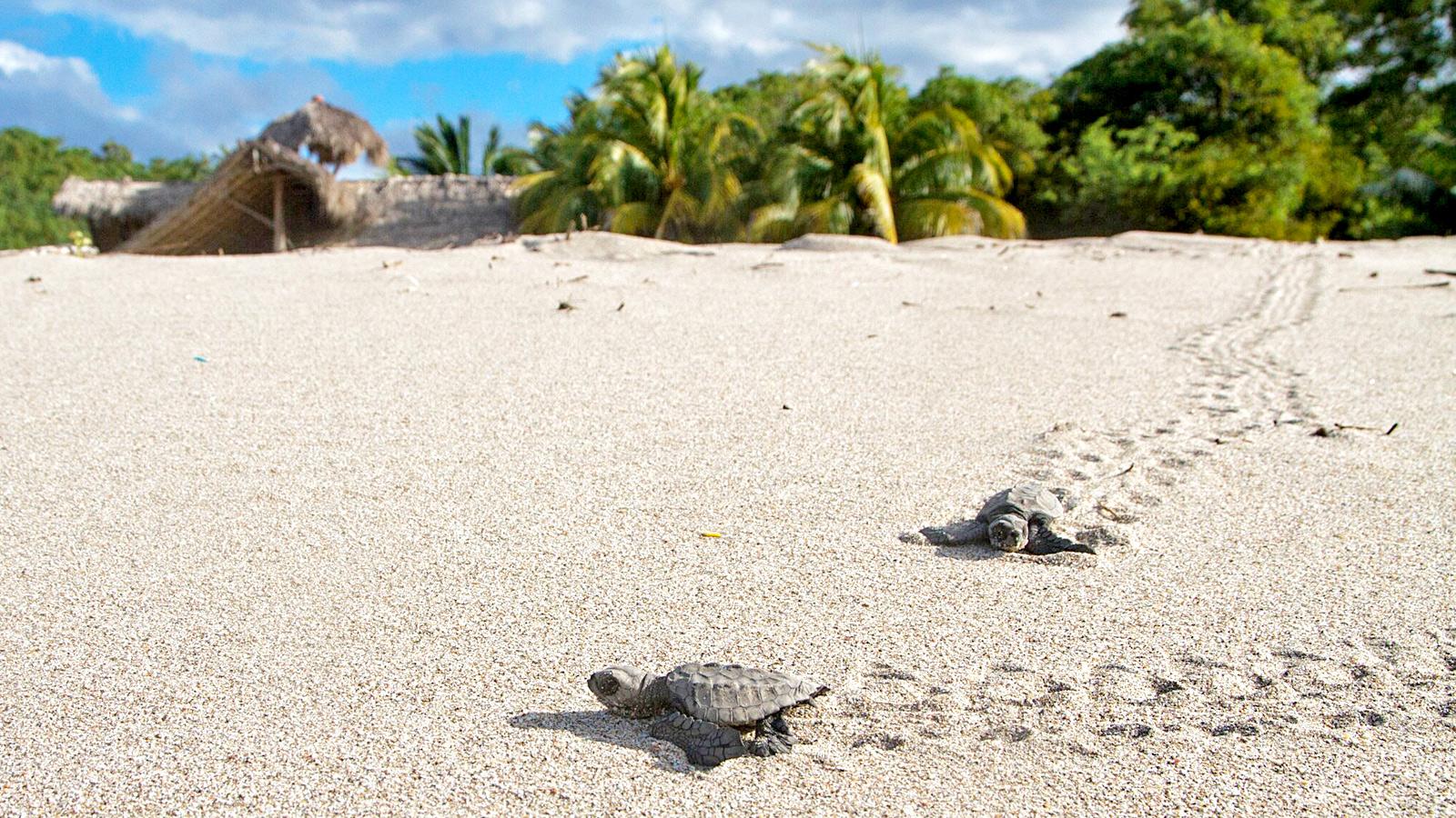 Nicaragua an der Pazifikküste mit Schildkröten auf der Selbstfahrertour traveljunkies
