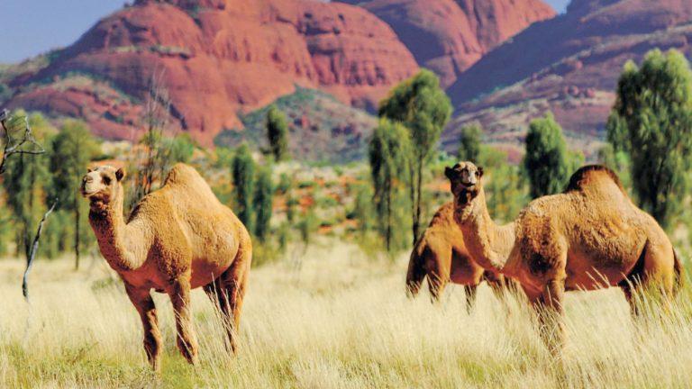 Olgas Australien Reisen für junge Leute traveljunkies