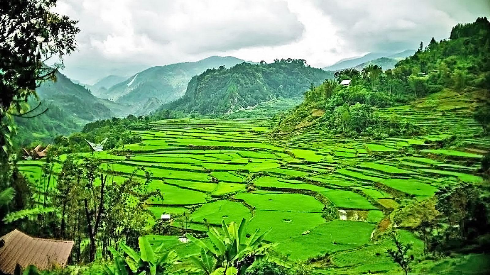 Reisterrassen im Toraja Hochland Süd Sulawesi Erlebnisreise traveljunkies