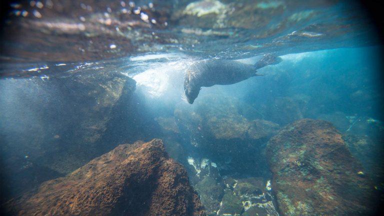 Südamerika Gruppenreisen für junge Leute mit Galapagos traveljunkies