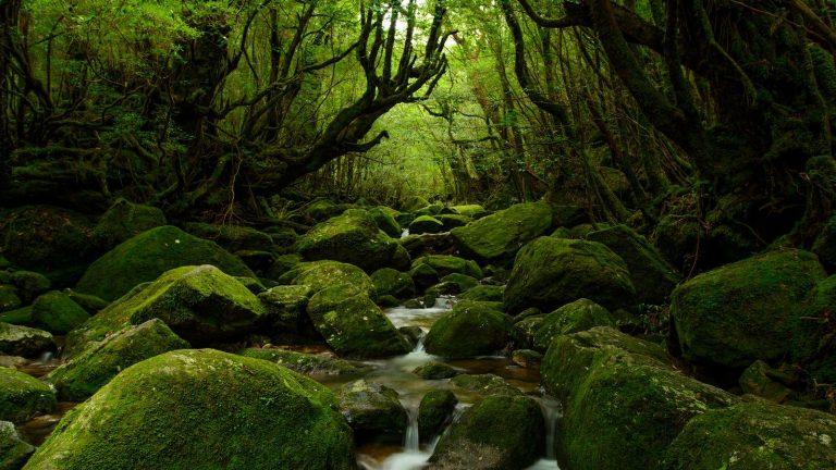 Südjapan Gruppenreise mit der Insel Kyushu traveljunkies