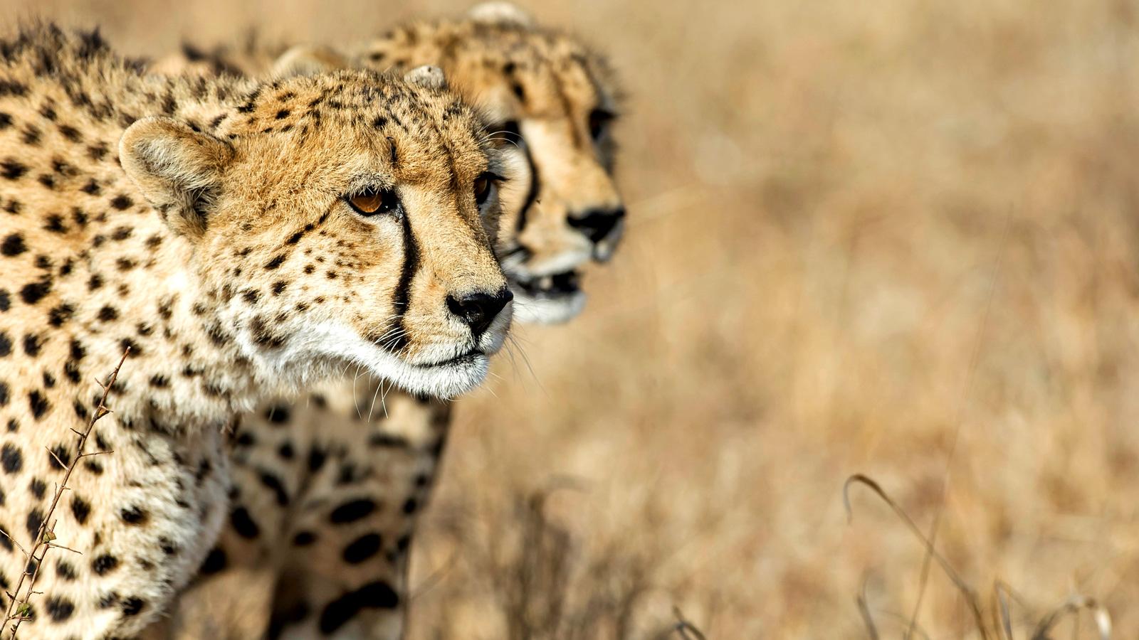 Safari Okavango Delta Botswana Afrika Erlebnisreise in Kleingruppe travelejunkies